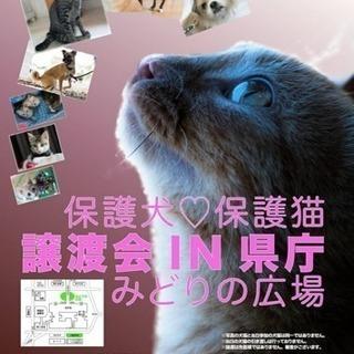 譲渡会IN埼玉県庁みどりの広場 保護犬♡保護猫