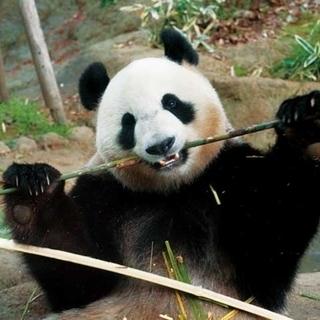 3月25日(日) 動物たちに癒される!!上野動物園に人気のパンダ...