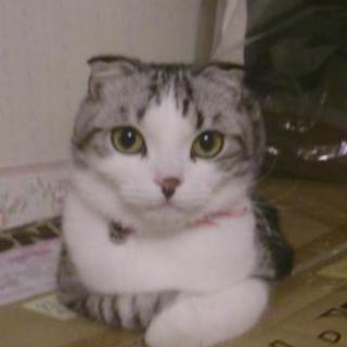ペットシッター 猫の手