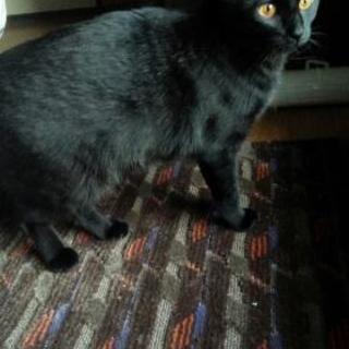黒猫ちゃん(メス)