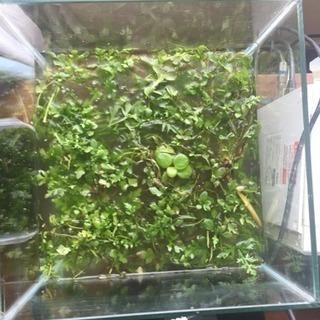 熱帯魚 アクアリウム 水草