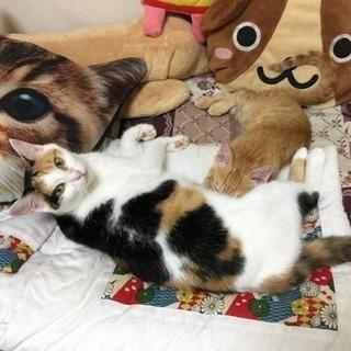 外猫ちゃん達のお世話を手伝って下さい🙇♀️‼️