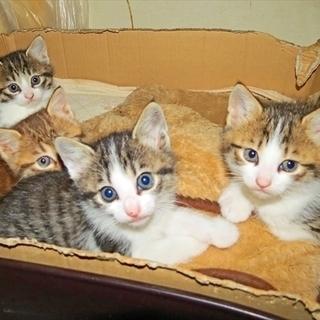 1ヶ月過ぎの子猫、里親さん募集しております。