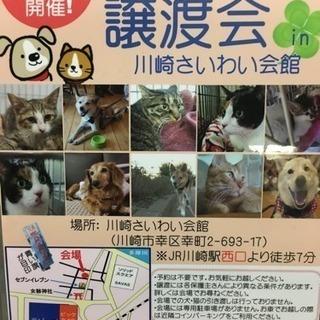3/25 保護犬猫譲渡会 川崎