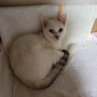 生後6ヶ月の子猫 里親さん募集