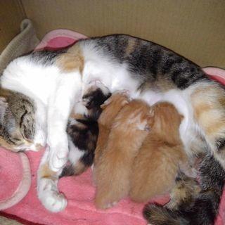 子猫 ★問合せ多数ありがとうございます。一旦打ち切ります。