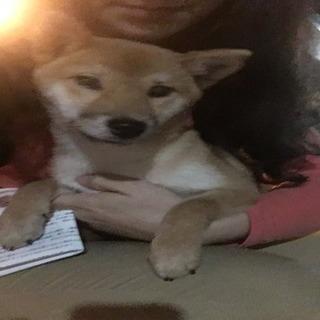名古屋市中川区で迷い犬見つけました