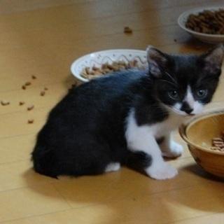 【急募!3月末】生後8か月と1歳のかわいい猫たちです!この子たち...