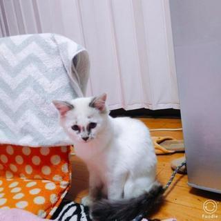 2歳半の猫♀の里親募集