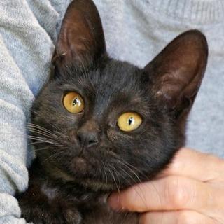黒猫リプトン。