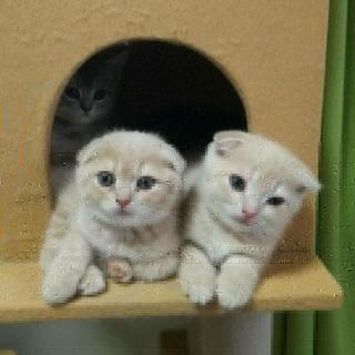 【半額4/16~5/15】世界の猫たちと触合いと癒しの猫ハウス
