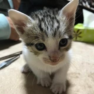 子猫貰ってくださいฅ(=・ω・=)ฅ