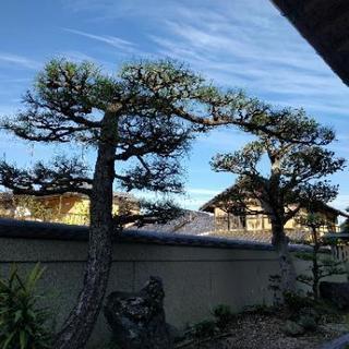 庭木の剪定・伐採・抜根・除草・消毒  作庭 カーポート 水…