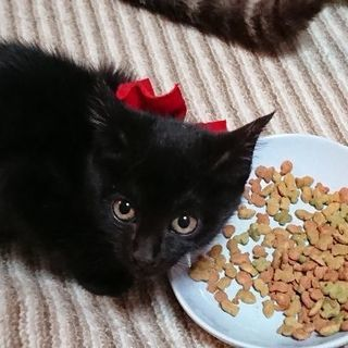 可愛い黒猫姉妹