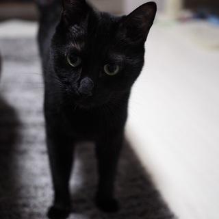 黒猫、オス、4歳半