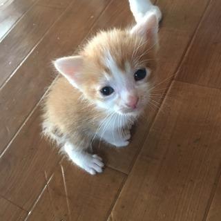 子猫2匹♡再募集です!!