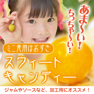【加工用にオススメ!】ミニ食用ほおずき「スウィートキャンディー」...