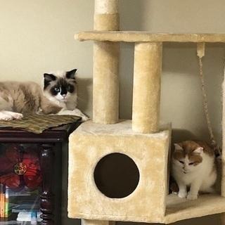 猫が飼えるシェアハウス キキの家