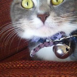 血統書付き 猫