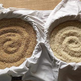 麹作り&米ぬか浄化ソープ作りワークショップ
