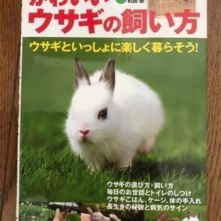 かわいいウサギの飼い方