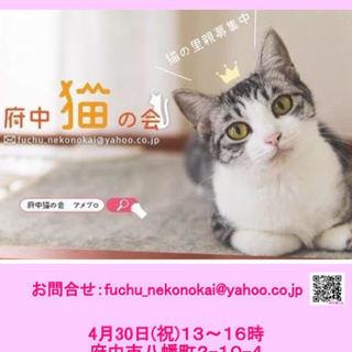 府中猫の譲渡会、開催★4月30日(祝、月)13~16時@府中★【N...