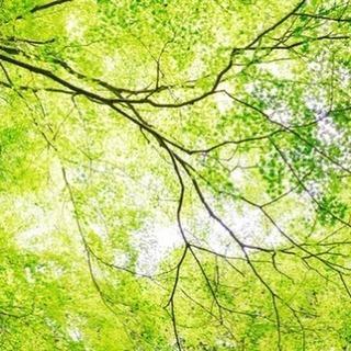 【イベントのご案内】野点~新緑のお茶会~