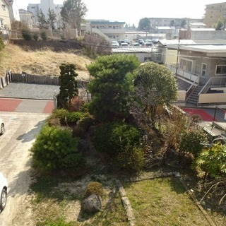 立派な庭木・形の良い庭石、無料で差し上げます!(引き取りにきてく...