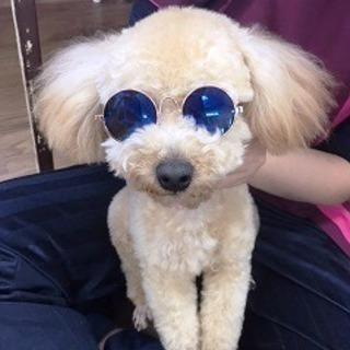 4月生入学間に合います!神戸愛犬美容専門学院