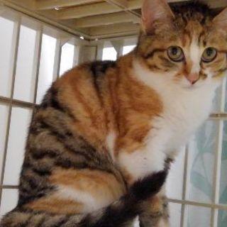 三毛子猫 推定生後五か月