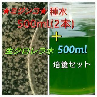 【ミジンコ】繁殖セット480ml★2本+ミジンコの餌