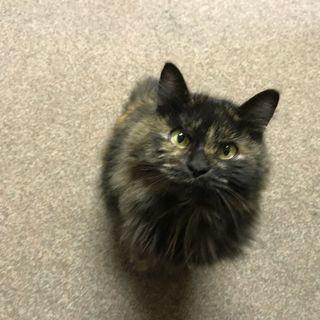 捨てられてしまった迷い猫ちゃん。誰か助けてください。。