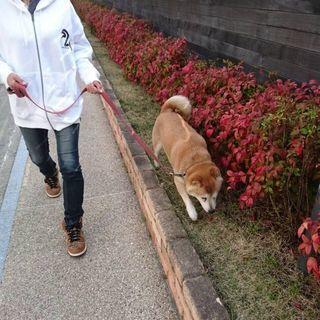 犬のお散歩代行サービス わんこいん犬の散歩