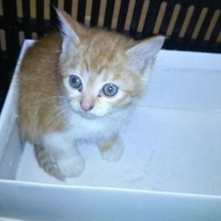 生後2ヶ月くらいの子猫