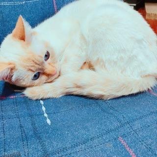 白ネコ メス 2歳