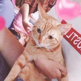 ♂猫の親子の家族になってあげて下さい。
