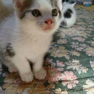 2月18日生まれの子猫です。