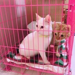可愛い♂猫親子ちゃんの家族になってあげてください