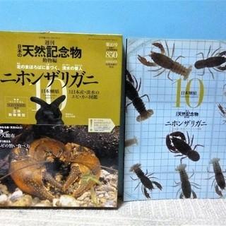 【リアル立体模型付き】 週刊・日本の天然記念物 二ホンザリガニ