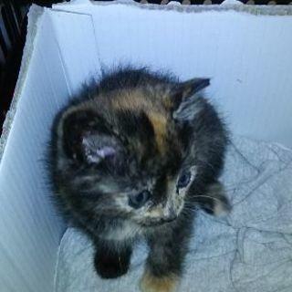 マーブル模様の子猫です