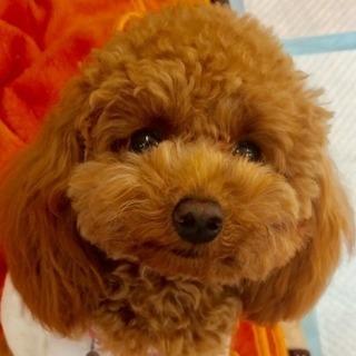 しつけ教室、夜間コース始めます。神戸愛犬美容専門学院 姫路校・神戸校