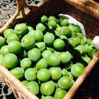年に一度の梅しごと①梅シロップ、梅肉エキス、カリカリ梅