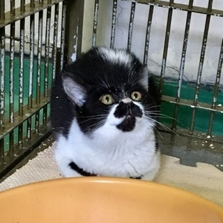 岩国保健所収容 猫🍀里親様 決まりました🍀