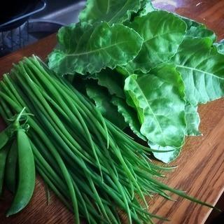岐阜の家庭菜園コミュニティ