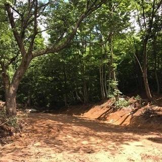 阿賀野市今板の山林