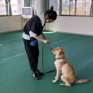 姫路校、しつけ教室スタート!神戸愛犬美容専門学院姫路校