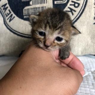 雨の中保護した子猫の里親さんになってくれる方