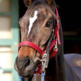 馬が可愛い! 馬好き! 競馬好きの方仲良くなりませんか?( `ー´)ノ