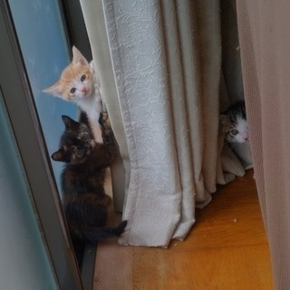 かわいい子猫です😸