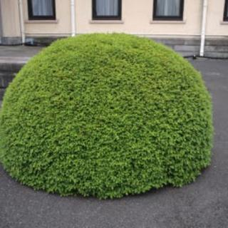 【ガーデンニング】最低価格¥1000~お庭の剪定、花壇等ご相談く...